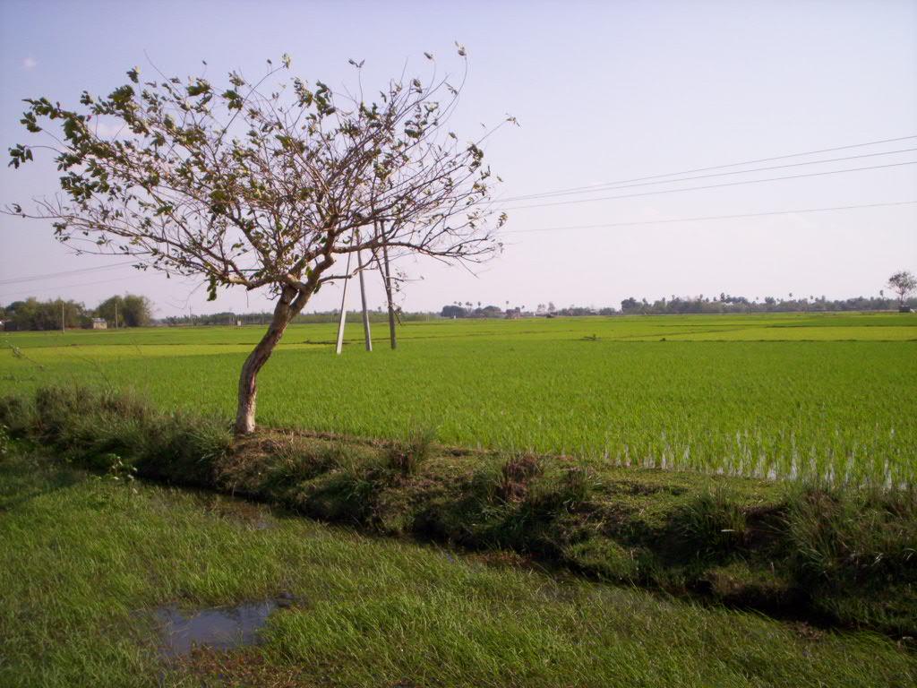 Shantiniketan 036